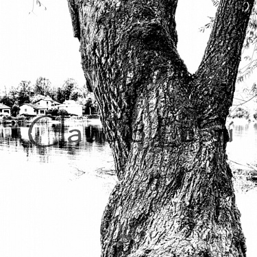 Along the river and on the water / Lungo il fiume e sull'acqua