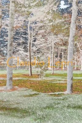 Photo Graphic Trees - Alberi foto-grafici