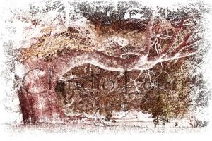 Tree Dance - La danza degli alberi