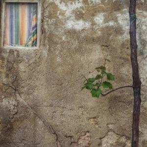 Essenza di muro (racconto 8)