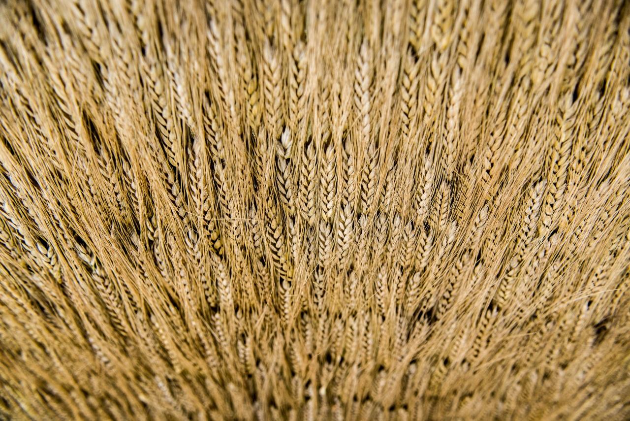 L'idea del grano