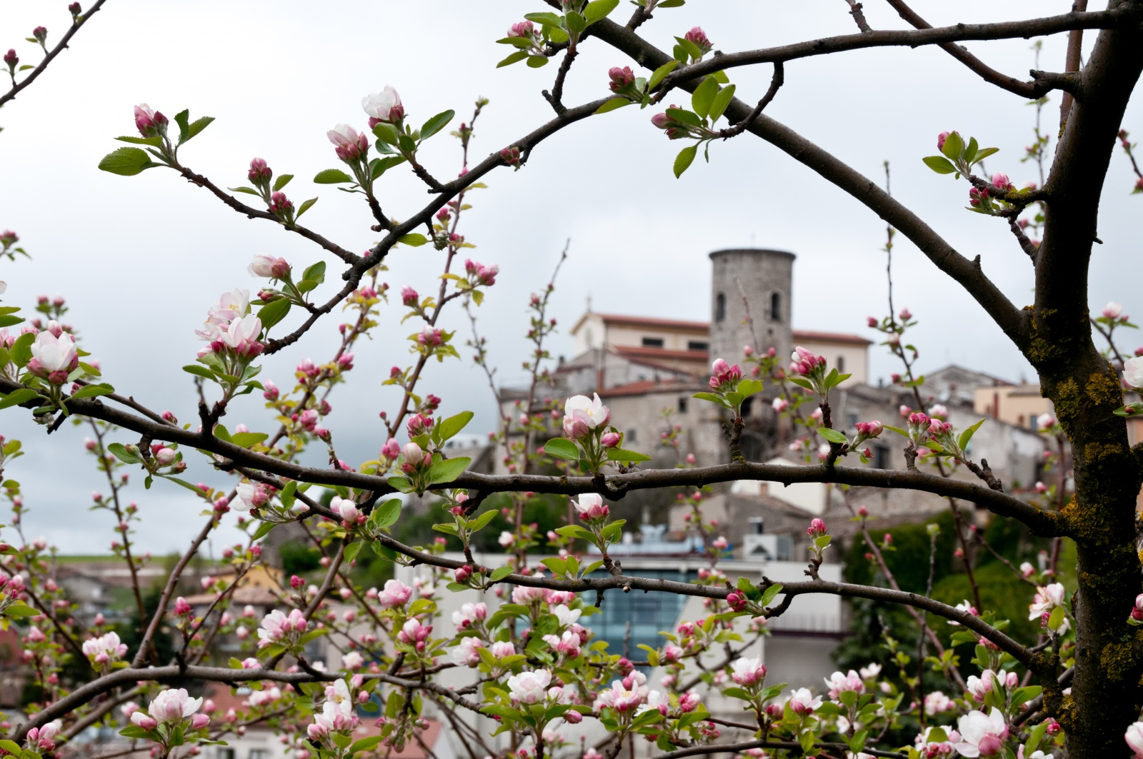 San Marco dei Cavoti, primavera 2012