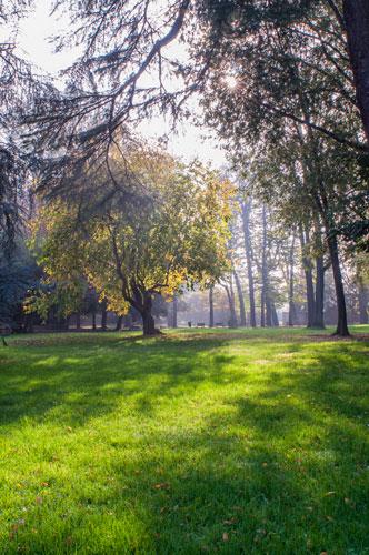 Progetto  Alberi Parco Villa Litta nelle quattro stagioni per Ass.Amici Villa Litta Onlus